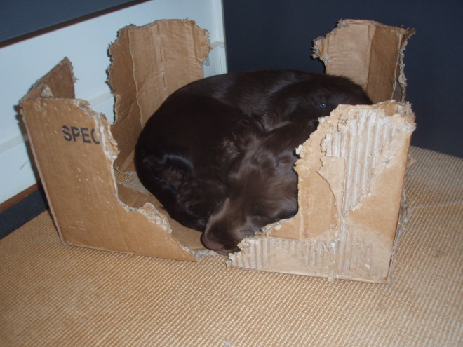 Hmm - this is a snug place to snooze in!