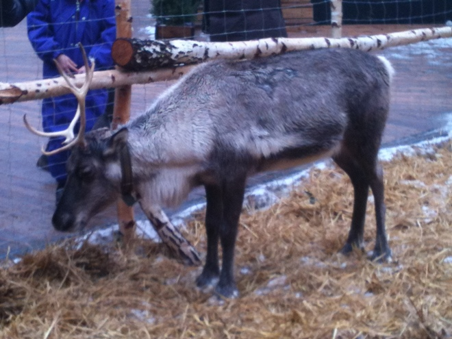 Rudolf looks a little lonely